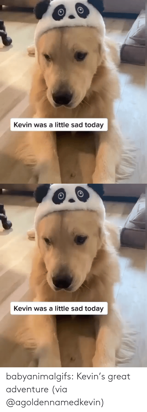 adventure: babyanimalgifs:  Kevin's great adventure (via @agoldennamedkevin)