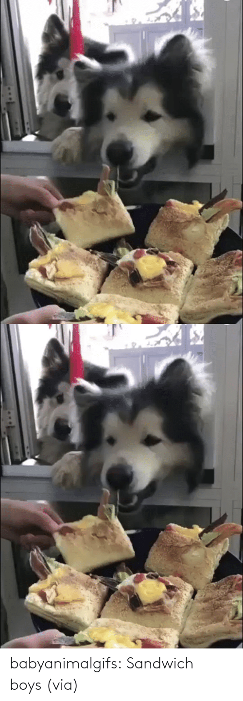 boys: babyanimalgifs:  Sandwich boys (via)