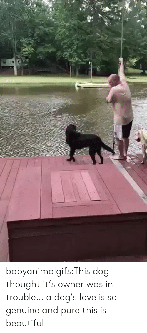 pure: babyanimalgifs:This dog thought it's owner was in trouble… a dog's love is so genuine and pure this is beautiful