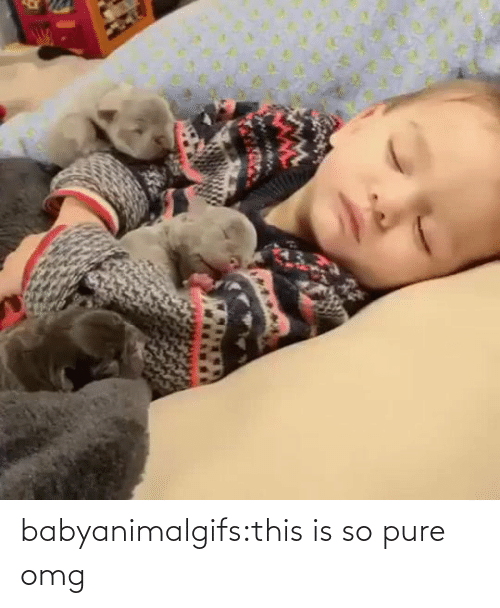 pure: babyanimalgifs:this is so pure omg