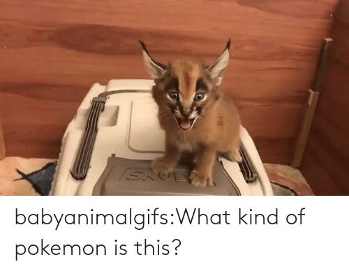 What Kind Of: babyanimalgifs:What kind of pokemon is this?