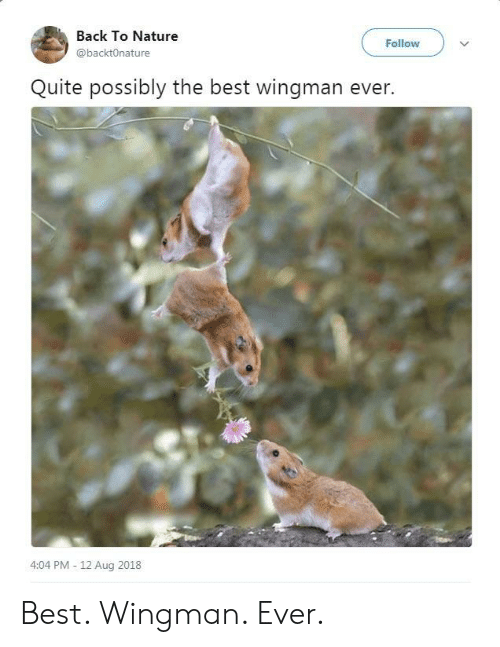 Best Wingman Ever: Back To Nature  @backtOnature  Follow  Quite possibly the best wingman ever.  4:04 PM - 12 Aug 2018 Best. Wingman. Ever.