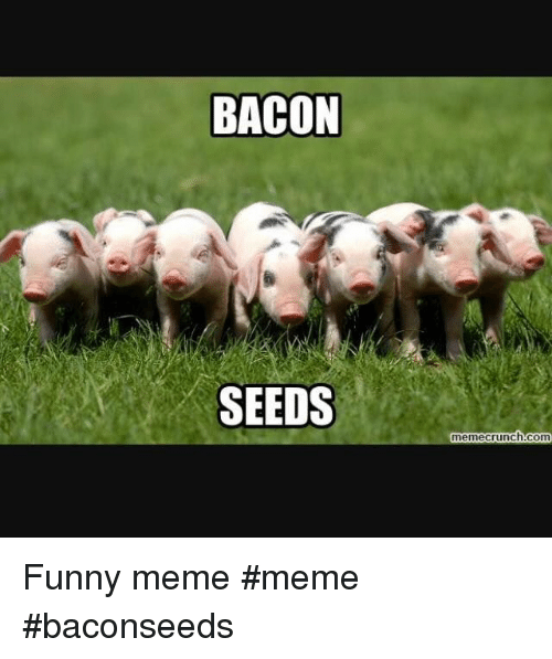 Memecrunch: BACON  SEEDS  memecrunch.com Funny meme #meme #baconseeds