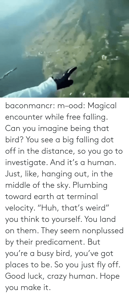 "bird: baconmancr:  m–ood: Magical encounter while free falling.  Can you imagine being that bird? You see a big falling dot off in the distance, so you go to investigate. And it's a human. Just, like, hanging out, in the middle of the sky. Plumbing toward earth at terminal velocity.  ""Huh, that's weird"" you think to yourself.  You land on them. They seem nonplussed by their predicament. But you're a busy bird, you've got places to be. So you just fly off. Good luck, crazy human. Hope you make it."
