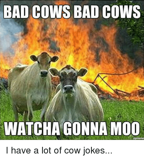 Cow Joke: BAD COWS BAD  COWS  WATCHA GONNA MOO I have a lot of cow jokes...