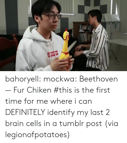 tumblr post: bahoryell: mockwa: Beethoven — Fur Chiken #this is the first time for me where i can DEFINITELY identify my last 2 brain cells in a tumblr post (via legionofpotatoes)