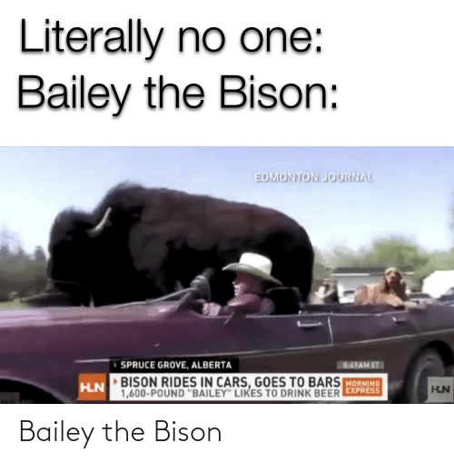 bison: Bailey the Bison