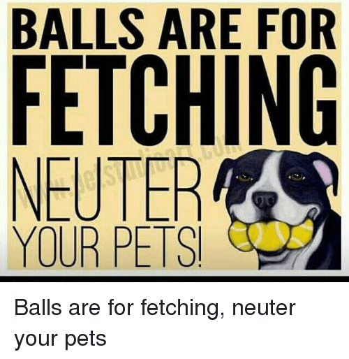 Memes, Pets, and 🤖: BALLS ARE FOR  FETCHING  NEUTER  YOUR PETS Balls are for fetching, neuter your pets