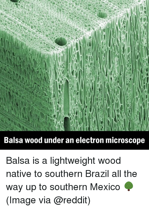 Electronical: Balsa wood under an electron microscope Balsa is a lightweight wood native to southern Brazil all the way up to southern Mexico 🌳 (Image via @reddit)