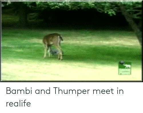 Bambi: Bambi and Thumper meet in realife