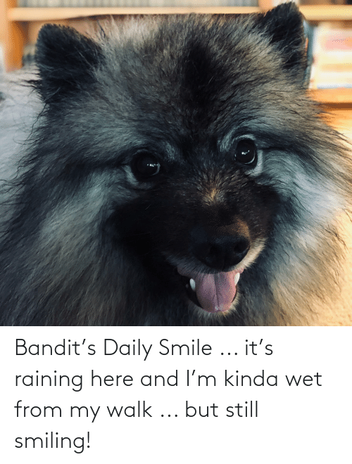 raining: Bandit's Daily Smile ... it's raining here and I'm kinda wet from my walk ... but still smiling!