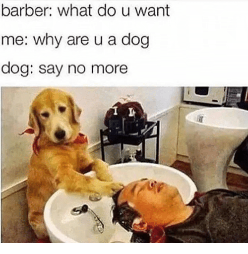 Dank Memes: barber: what do u want  me: why are u a dog  dog: say no more