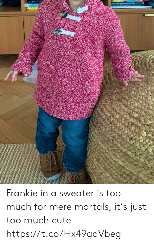 acceptable: BARESTTO ARE AR ACCEPTABLE LEVEL OF TIEA Frankie in a sweater is too much for mere mortals, it's just too much cute https://t.co/Hx49adVbeg