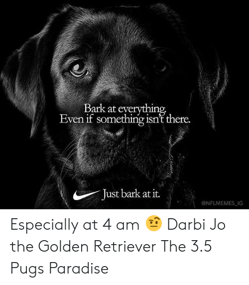 Nflmemes: Bark at everything  Even if something isn't there.  Just bark at it.  @NFLMEMES IG Especially at 4 am 🤨 Darbi Jo the Golden Retriever The 3.5 Pugs Paradise