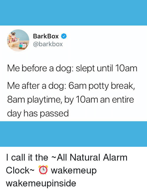 potty: BarkBox  @barkbo>x  Me before a dog: slept until 10am  Me after a dog: 6am potty break,  8am playtime, by 10am an entire  day has passed I call it the ~All Natural Alarm Clock~ ⏰ wakemeup wakemeupinside