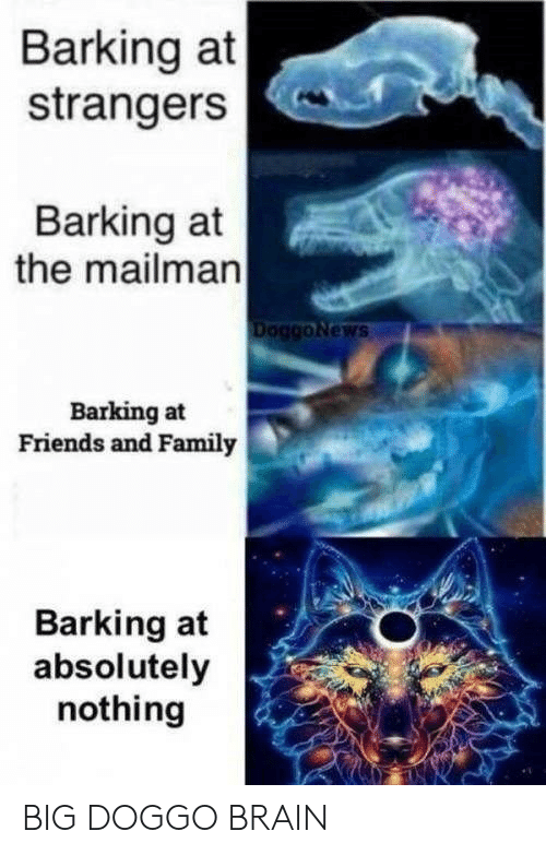 strangers: Barking at  strangers  Barking at  the mailman  DoggoNews  Barking at  Friends and Family  Barking at  absolutely  nothing BIG DOGGO BRAIN