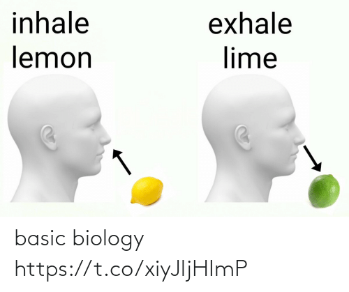 basic: basic biology https://t.co/xiyJljHImP