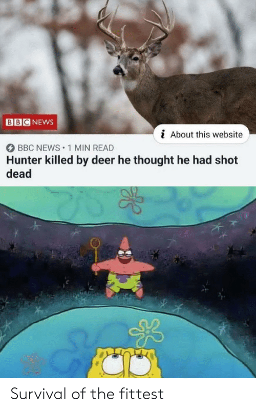 bbc: BB  NEWS  i About this website  BBC NEWS 1 MIN READ  Hunter killed by deer he thought he had shot  dead Survival of the fittest
