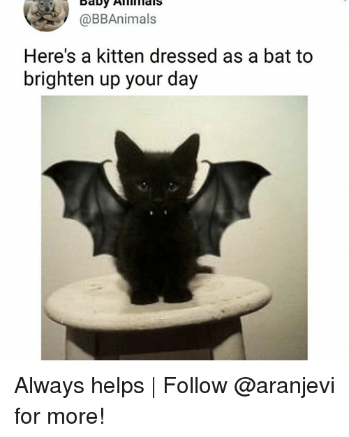 Memes, Helps, and 🤖: @BBAnimals  Here's a kitten dressed as a bat to  brighten up your day Always helps   Follow @aranjevi for more!