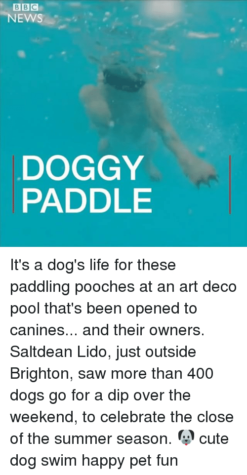 Cute, Dogs, and Life: BBC  NEWS  DOGGY  PADDLE It's a dog's life for these paddling pooches at an art deco pool that's been opened to canines... and their owners. Saltdean Lido, just outside Brighton, saw more than 400 dogs go for a dip over the weekend, to celebrate the close of the summer season. 🐶 cute dog swim happy pet fun