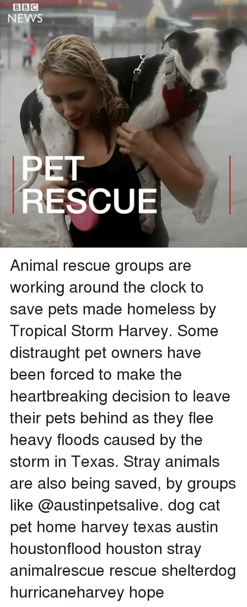 Animals, Clock, and Homeless: BBC  NEWS  PET  RESCUE Animal rescue groups are working around the clock to save pets made homeless by Tropical Storm Harvey. Some distraught pet owners have been forced to make the heartbreaking decision to leave their pets behind as they flee heavy floods caused by the storm in Texas. Stray animals are also being saved, by groups like @austinpetsalive. dog cat pet home harvey texas austin houstonflood houston stray animalrescue rescue shelterdog hurricaneharvey hope