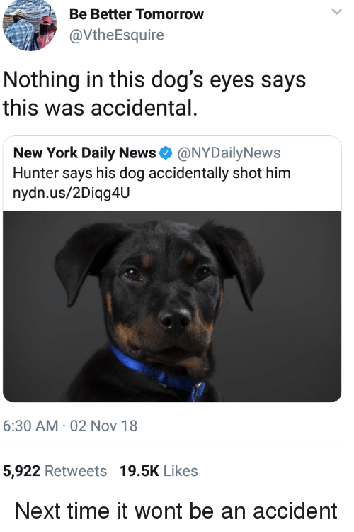 daily news: Be Better Tomorrow  @VtheEsquire  Nothing in this dog's eyes says  this was accidental  New York Daily News Φ @NYDailyNews  Hunter says his dog accidentally shot him  nydn.us/2Diqg4U  6:30 AM 02 Nov 18  5,922 Retweets 19.5K Likes Next time it wont be an accident