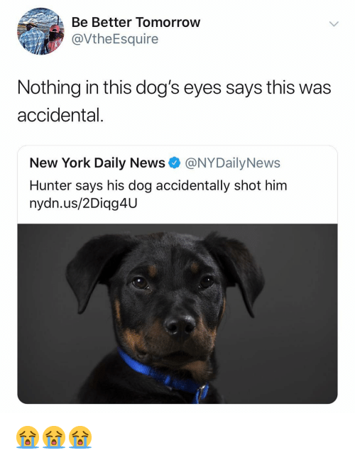daily news: Be Better Tomorroww  @VtheEsquire  Nothing in this dog's eyes says this was  accidental.  New York Daily News @NYDailyNews  Hunter says his dog accidentally shot him  nydn.us/2Diag4U 😭😭😭