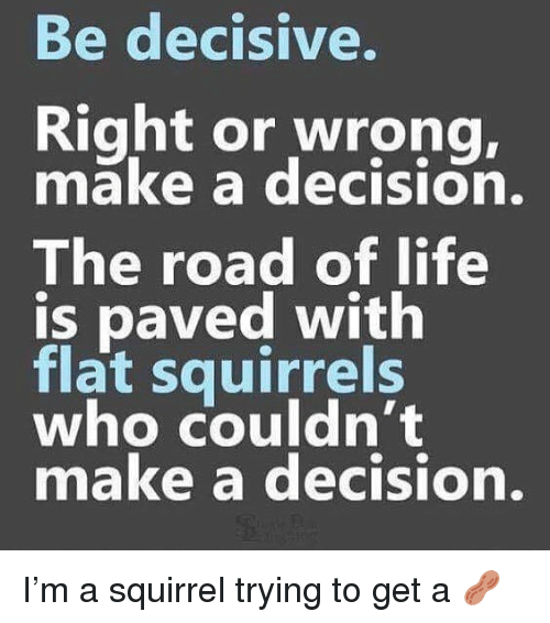 decisive: Be decisive.  Right or wrong,  make a decision.  The road of life  is paved with  flat squirrels  who couldn't  make a decision. I'm a squirrel trying to get a 🥜