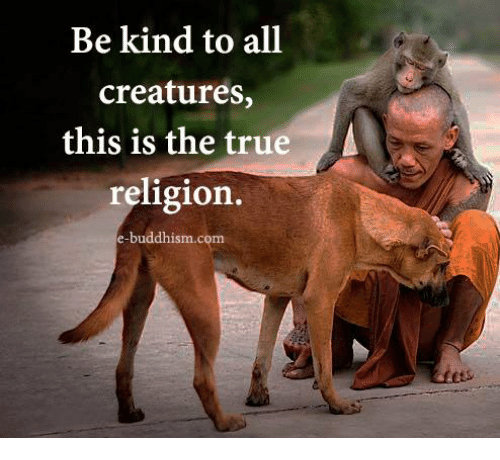 Buddhism: Be kind to all  creatures,  this is the true  religion  e-buddhism.com