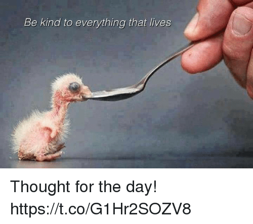 Thought, Day, and For: Be kind to everything that lives Thought for the day! https://t.co/G1Hr2SOZV8