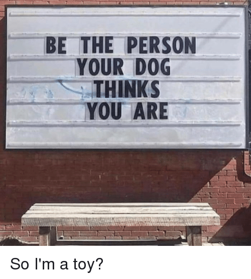 Dank, 🤖, and Dog: - BE THE PERSON  YOUR DOG  THINKS  YOU ARE So I'm a toy?