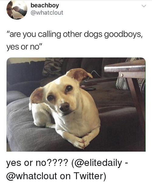 """Dogs, Memes, and Twitter: beachboy  @whatclout  """"are you calling other dogs goodboys,  yes or no"""" yes or no???? (@elitedaily - @whatclout on Twitter)"""