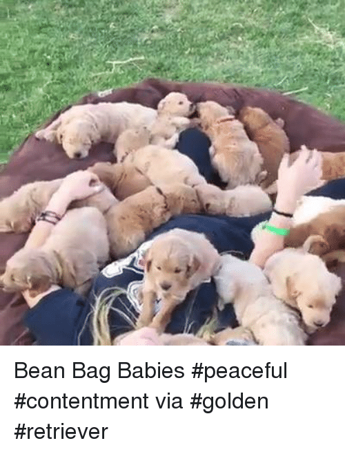 Bean Bagged: Bean Bag Babies #peaceful #contentment via #golden #retriever