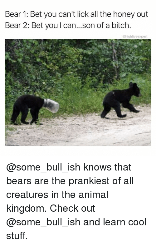 Bitch, Memes, and Animal: Bear 1: Bet you can't lick all the honey out  Bear 2: Bet you l can...son of a bitch.  @highfiveexpert @some_bull_ish knows that bears are the prankiest of all creatures in the animal kingdom. Check out @some_bull_ish and learn cool stuff.