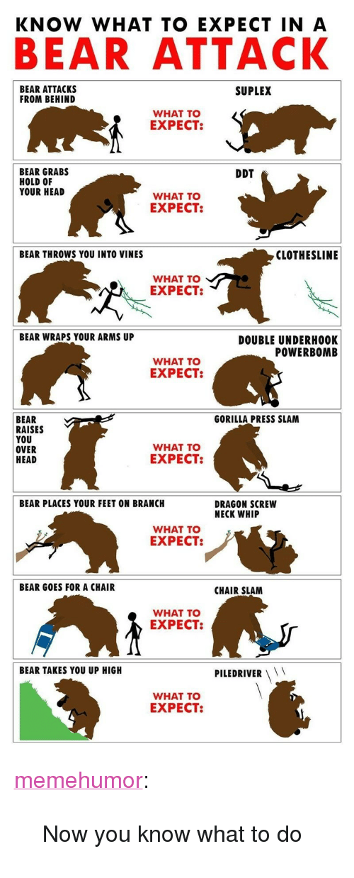 """Head, Tumblr, and Whip: BEAR ATTACK  BEAR ATTACKS  FROM BEHIND  SUPLEX  WHAT TO  EXPECT  BEAR GRABS  HOLD OF  YOUR HEAD  DDT  WHAT TO  EXPECT  BEAR THROWS YOU INTO VINES  CLOTHESLINE  WHAT TO  EXPECT:  BEAR WRAPS YOUR ARMS UP  DOUBLE UNDERH0OK  POWERBOMB  WHAT TO  EXPECT:  BEAR  RAISES  YOU  OVER  HEAD  GORILLA PRESS SLAM  WHAT TO  EXPECT:  BEAR PLACES YOUR FEET ON BRANCH  DRAGON SCREW  NECK WHIP  WHAT TO  EXPECT:  BEAR GOES FOR A CHAIR  CHAIR SLAM  WHAT TO  EXPECT:  BEAR TAKES YOU UP HIGH  PILEDRIVER  WHAT TO  EXPECT: <p><a href=""""http://memehumor.net/post/168861650307/now-you-know-what-to-do"""" class=""""tumblr_blog"""">memehumor</a>:</p>  <blockquote><p>Now you know what to do</p></blockquote>"""