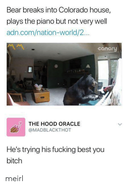 Oracle: Bear breaks into Colorado house,  plays the piano but not very well  adn.com/nation-world/2...  canaru  THE HOOD ORACLE  @MADBLACKTHOT  He's trying his fucking best you  bitch meirl