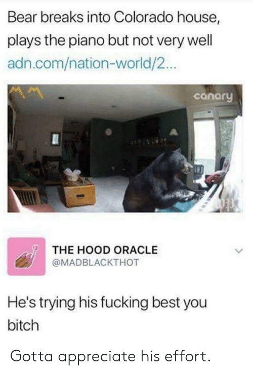 Oracle: Bear breaks into Colorado house,  plays the piano but not very well  adn.com/nation-world/2..  canory  THE HOOD ORACLE  @MADBLACKTHOT  He's trying his fucking best you  bitch Gotta appreciate his effort.