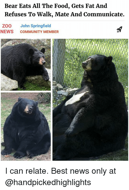 Community, Food, and Memes: Bear Eats All The Food, Gets Fat And  Refuses To Walk, Mate And Communicate.  ZOO John Springfield  NEWS COMMUNITY MEMBER I can relate. Best news only at @handpickedhighlights