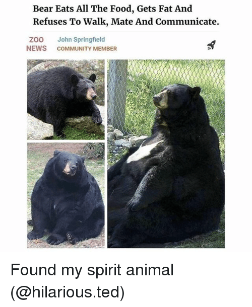 Community, Food, and Funny: Bear Eats All The Food, Gets Fat And  Refuses To Walk, Mate And Communicate.  ZOO John Springfield  NEWS COMMUNITY MEMBER Found my spirit animal (@hilarious.ted)