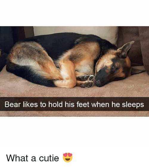 Memes, Bear, and 🤖: Bear likes to hold his feet when he sleeps What a cutie 😍