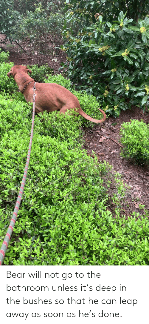 bushes: Bear will not go to the bathroom unless it's deep in the bushes so that he can leap away as soon as he's done.