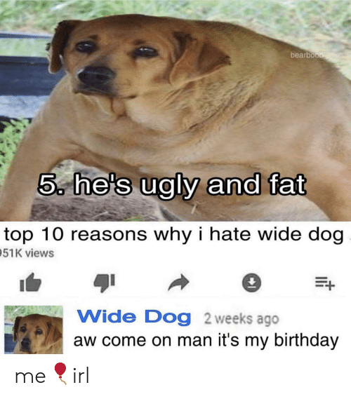 its my birthday: bearboo  5, he's ualv and fat  top 10 reasons why i hate wide dog  51K views  Wide Dog 2 weeks ago  aw come on man it's my birthday me🎈irl