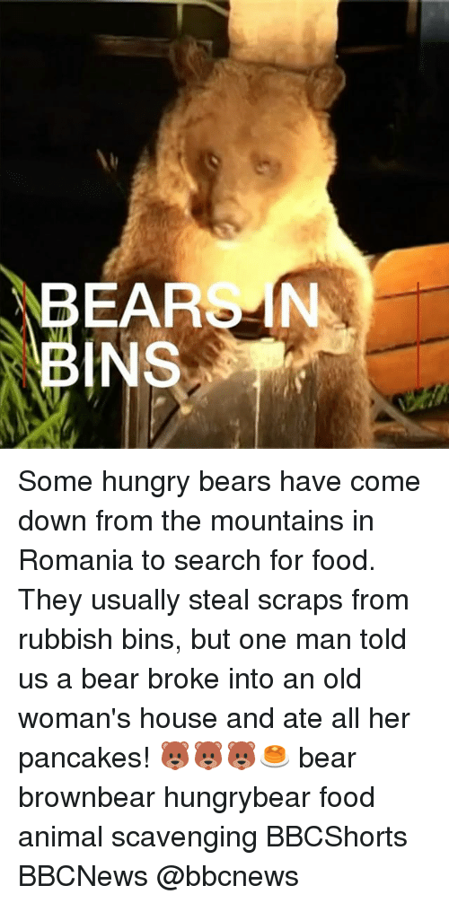 Food, Hungry, and Memes: BEARSN  INS Some hungry bears have come down from the mountains in Romania to search for food. They usually steal scraps from rubbish bins, but one man told us a bear broke into an old woman's house and ate all her pancakes! 🐻🐻🐻🥞 bear brownbear hungrybear food animal scavenging BBCShorts BBCNews @bbcnews