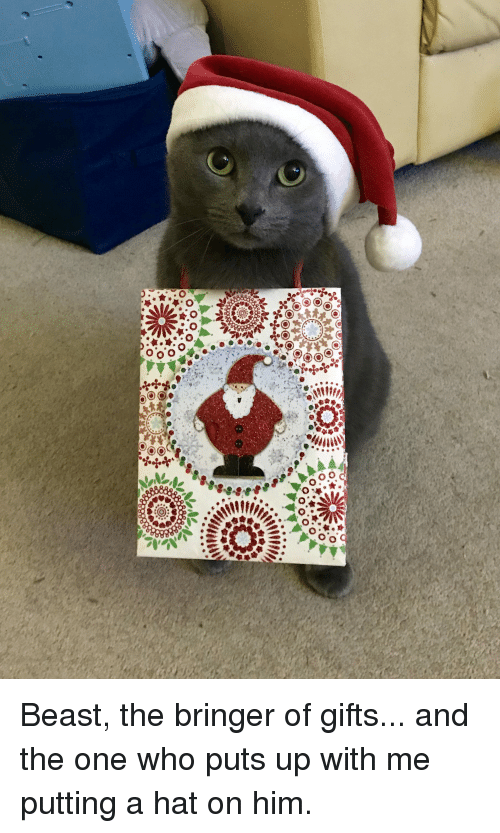 Beast, Who, and Him: Beast, the bringer of gifts... and the one who puts up with me putting a hat on him.