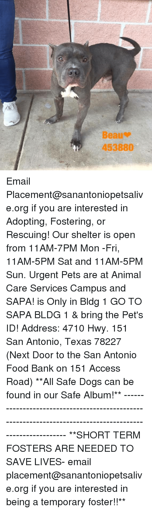 Dogs, Food, and Memes: Beau-  453880 Email Placement@sanantoniopetsalive.org if you are interested in Adopting, Fostering, or Rescuing!  Our shelter is open from 11AM-7PM Mon -Fri, 11AM-5PM Sat and 11AM-5PM Sun.  Urgent Pets are at Animal Care Services Campus and SAPA! is Only in Bldg 1 GO TO SAPA BLDG 1 & bring the Pet's ID! Address: 4710 Hwy. 151 San Antonio, Texas 78227 (Next Door to the San Antonio Food Bank on 151 Access Road)  **All Safe Dogs can be found in our Safe Album!** ---------------------------------------------------------------------------------------------------------- **SHORT TERM FOSTERS ARE NEEDED TO SAVE LIVES- email placement@sanantoniopetsalive.org if you are interested in being a temporary foster!!**