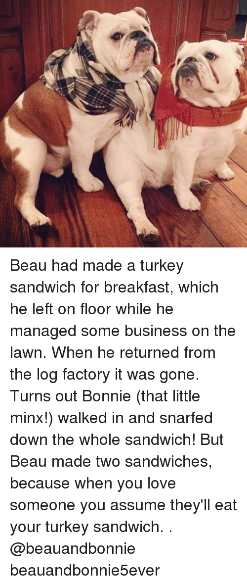 turkey sandwich: Beau had made a turkey sandwich for breakfast, which he left on floor while he managed some business on the lawn. When he returned from the log factory it was gone. Turns out Bonnie (that little minx!) walked in and snarfed down the whole sandwich! But Beau made two sandwiches, because when you love someone you assume they'll eat your turkey sandwich. . @beauandbonnie beauandbonnie5ever