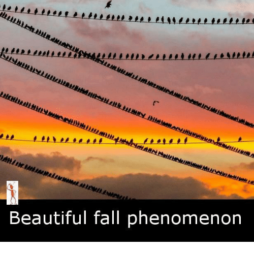 Fall: Beautiful fall phenomenon