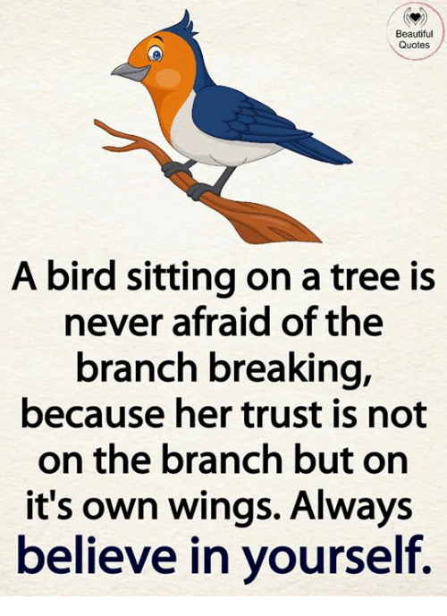 Beautiful, Memes, and Quotes: Beautiful  Quotes  A bird sitting on a tree is  never afraid of the  branch breaking,  because her trust is not  on the branch but on  it's own wings. Always  believe in yourself