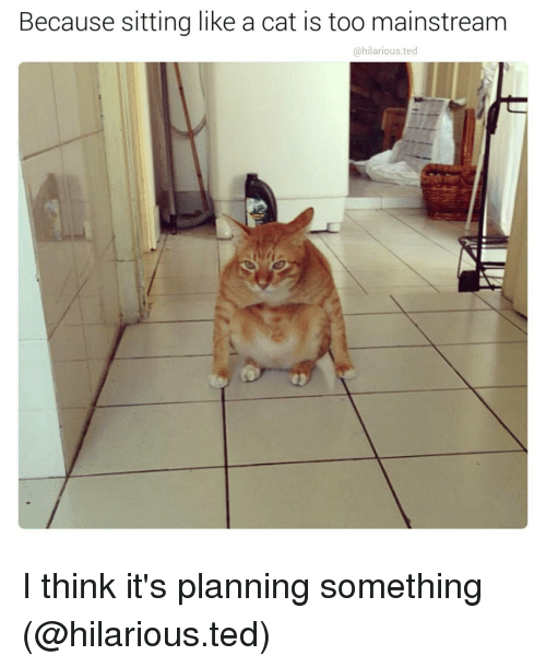 Too Mainstream: Because sitting like a cat is too mainstream  ohilarious.ted I think it's planning something (@hilarious.ted)