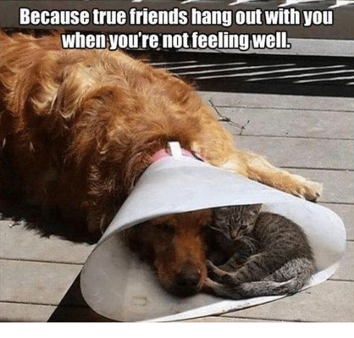 dank: Because true friends hang out with you  When you're not feeling well